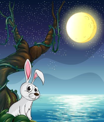 Un lapin et la pleine lune brillante