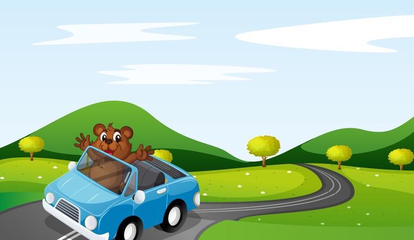 oso y carro