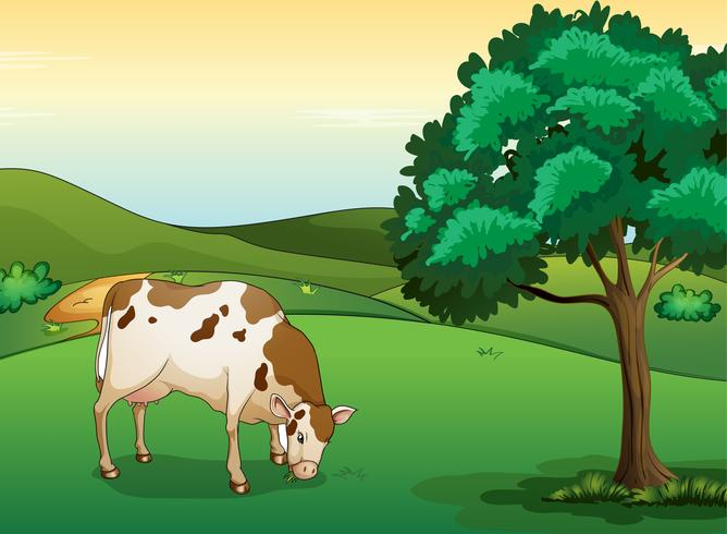 A cow eating grass