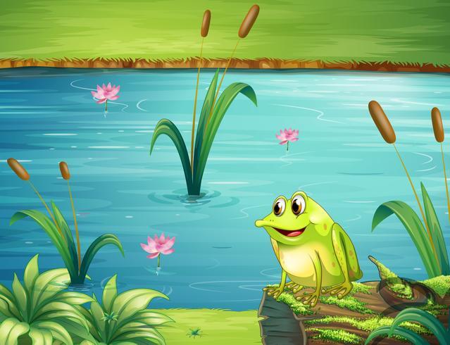 Una rana a la orilla del rio