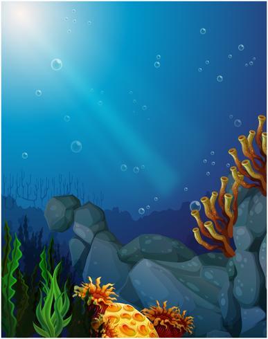 Coralli e alghe sotto il mare