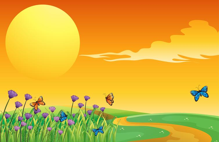 Lua cheia e as borboletas