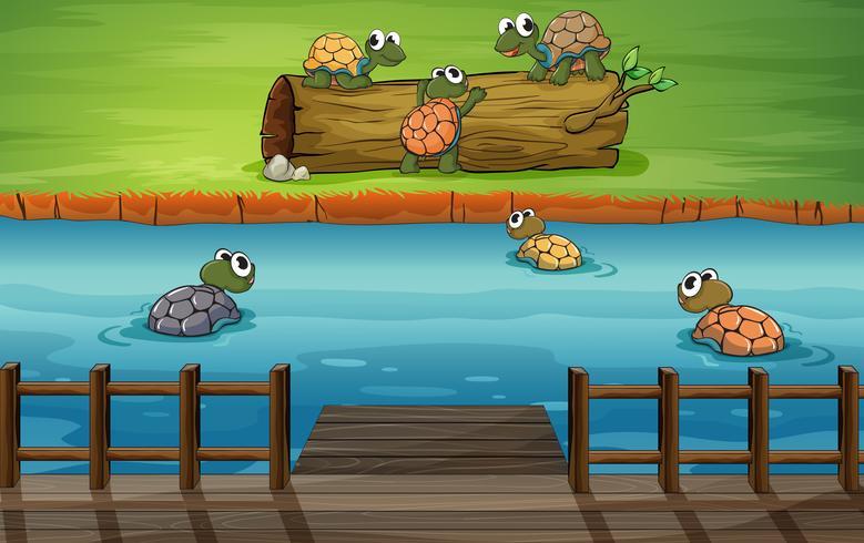 En grupp sköldpaddor vid floden