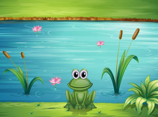 Ein Fluss und ein Frosch