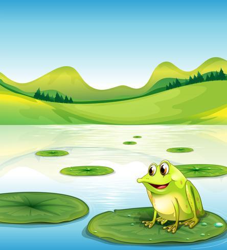 Una rana sobre el agua lilly