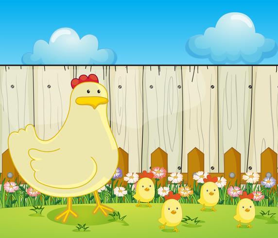 Una gallina y los cuatro polluelos.