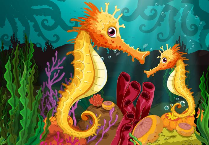Two seahorses under the sea