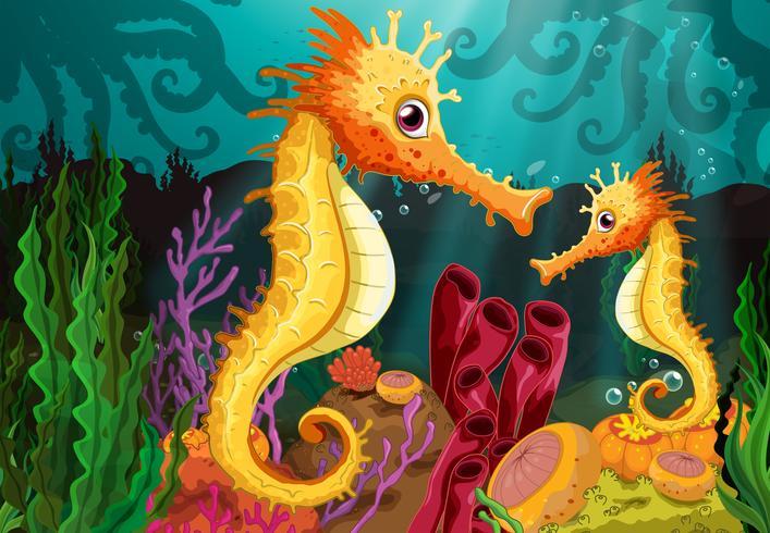 Twee zeepaardjes onder de zee