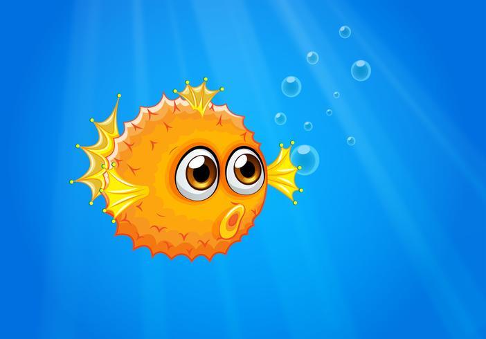 Een lelijke kogelvis in de oceaan