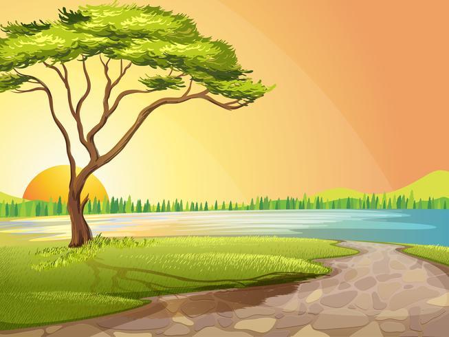 Un fiume e un albero