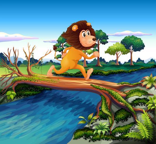 Un león corriendo al cruzar el río.