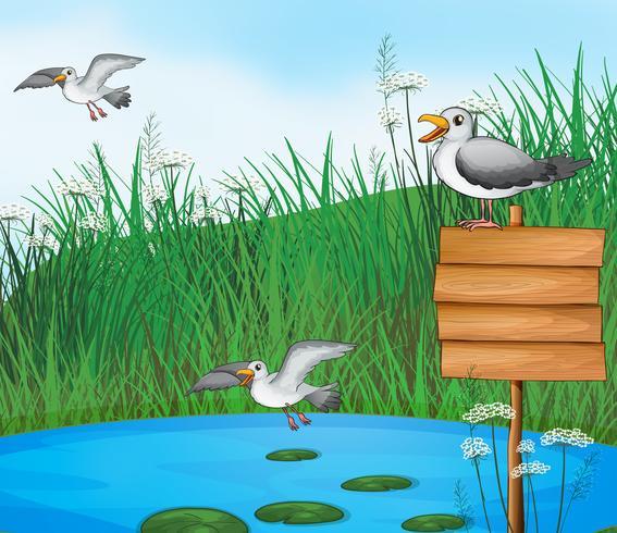 Três pássaros no lago com uma tabuleta