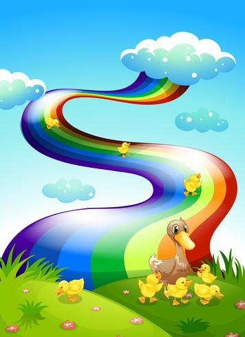 En anka och hennes ankor på kullen med en regnbåge ovanför