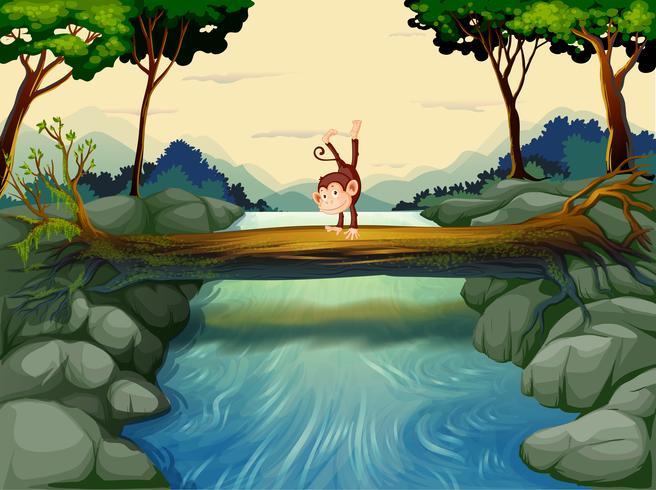 Un singe traversant la rivière