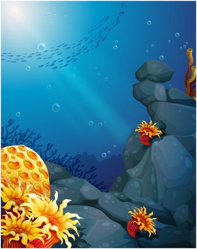 Los corales cerca de las rocas y la escuela de peces.