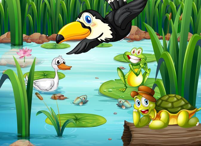 Un laghetto con animali