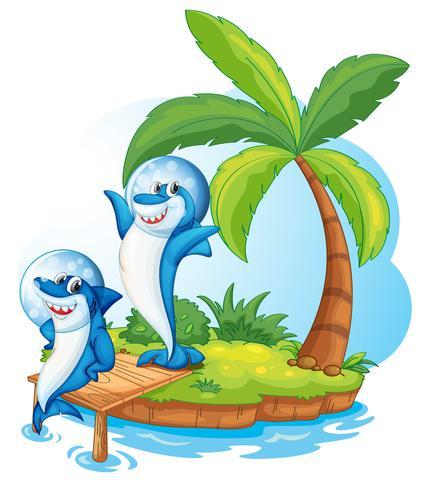 pez ballena en la isla