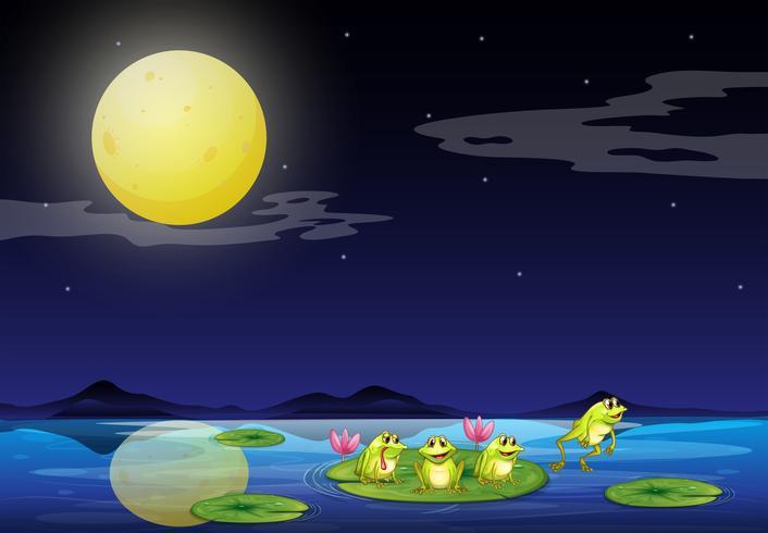 Kikkers bij de waterlelies in de rivier