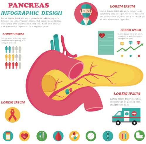 Pankreas Inforgraph vektor