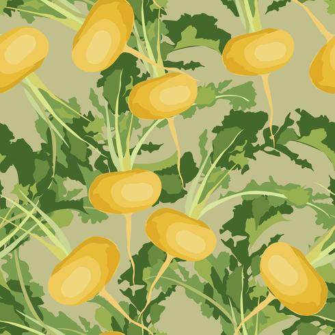 Vegetable turnip seamless pattern. Healthy food background. vector