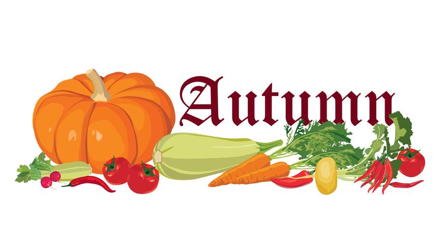Vegetable label. Healthy food. Autumn harvest banner. vector