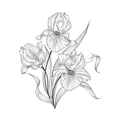 Floral bouquet, flower iris. Fourish Greeting Card Design vector