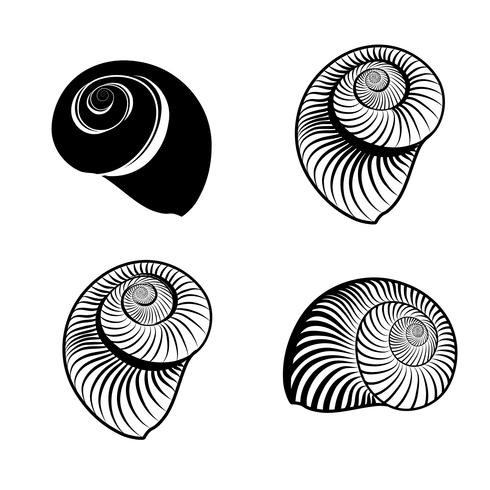 Concha nautilus grabada con signos. Conjunto de animales de vida marina.