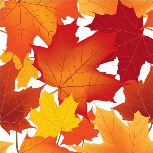 Autumn maple leaves seamless pattern Floral background vector