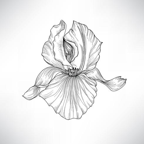 Flower isolated. Floral engraving illustration. Vector set.