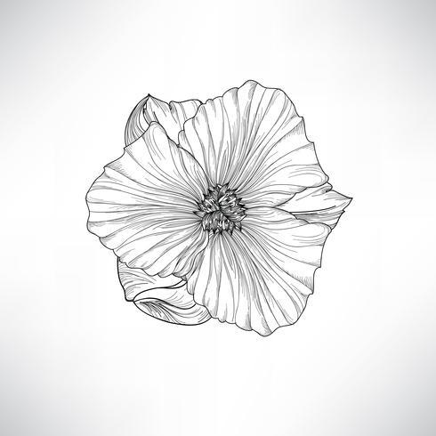 Fiore isolato Illustrazione incisione floreale Set vettoriale.