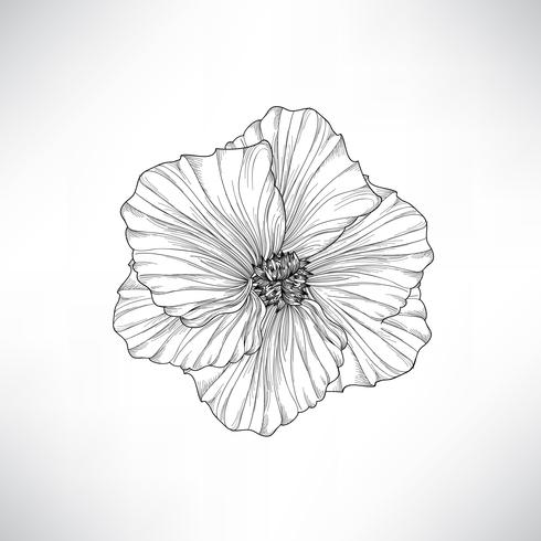 Fleur isolée Illustration florale de gravure. Ensemble de vecteurs.