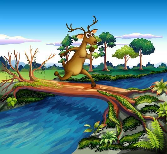 En hjort som korsar floden