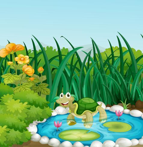 Una tartaruga nello stagno con ninfee