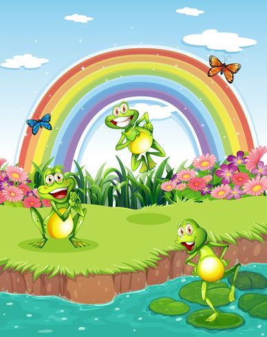 Drie speelse kikkers bij de vijver en een regenboog in de lucht