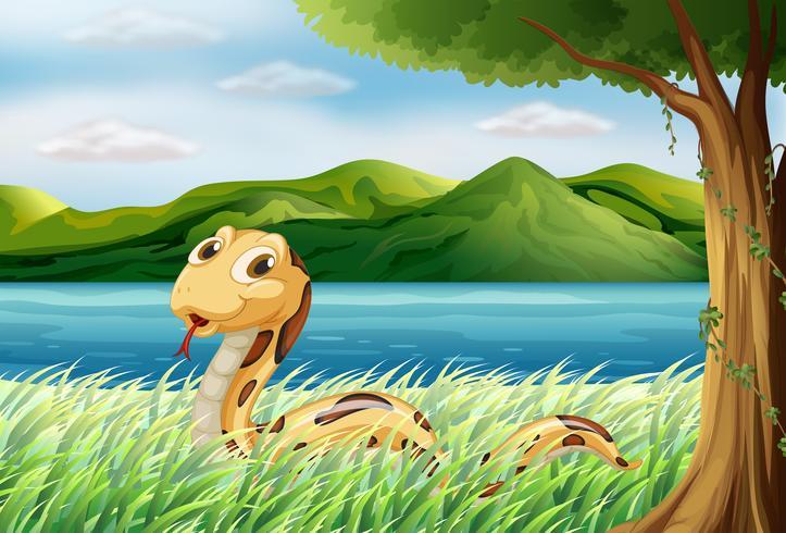 Een slang op het gras
