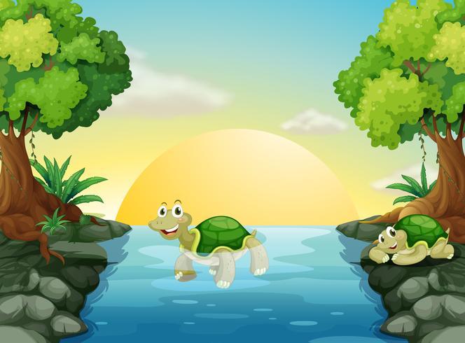 Een lachende schildpad bij de rivier