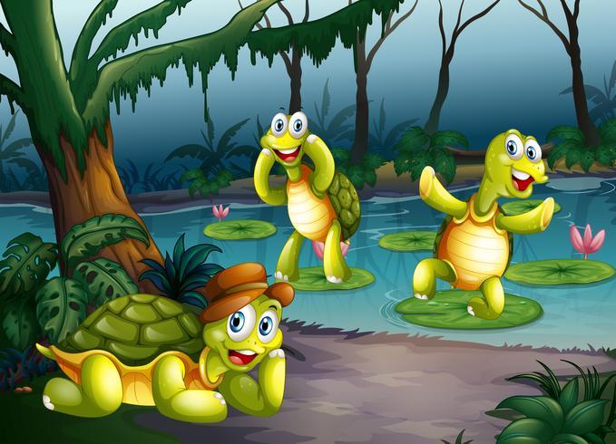 Tartarugas e lagoa