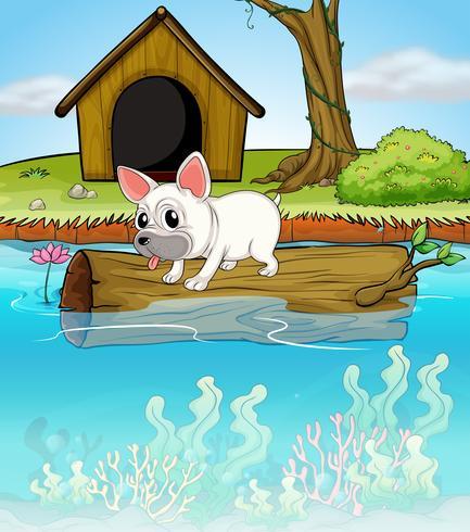 Un perro encima de un tronco flotante.