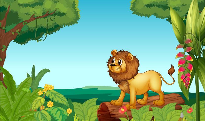 Um assustador leão na selva