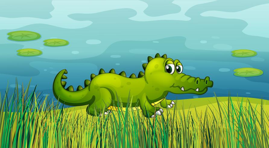 En krokodil vid sidan av dammen