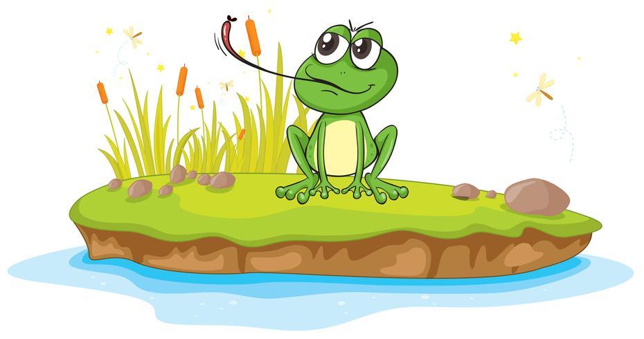 una rana e acqua
