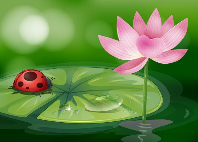 Um waterlily com um bug vermelho