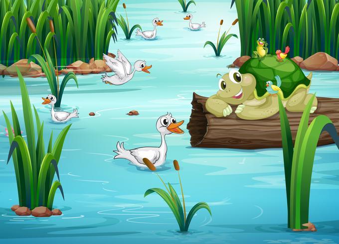Animais e lagoa