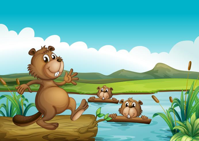 Bevers die in de rivier met hout spelen