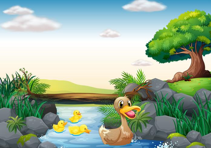 Ducks and river