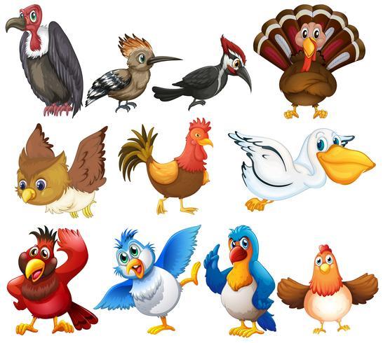 Conjunto de aves