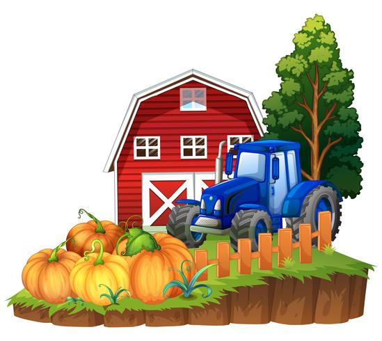 Farm scene with blue tractor and pumpkins vector
