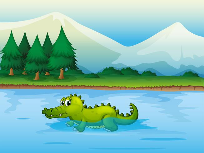 An alligator in the river