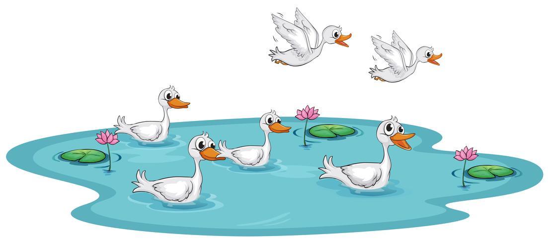 Um, grupo, de, patos, em, a, lagoa