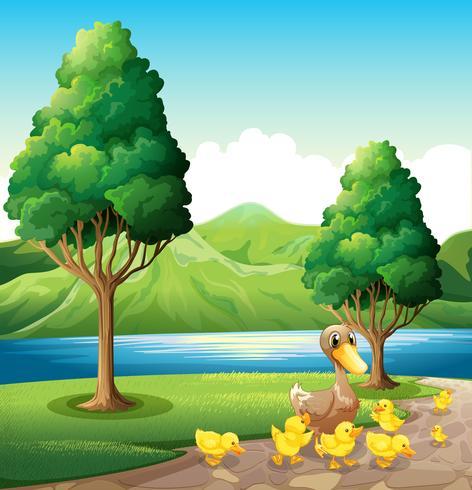 Una familia de patos en la orilla del río.